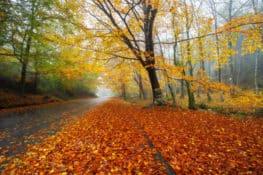 8 lugares para dar as boas-vindas ao outono