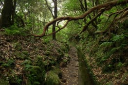 Viagem ao interior da floresta da Madeira