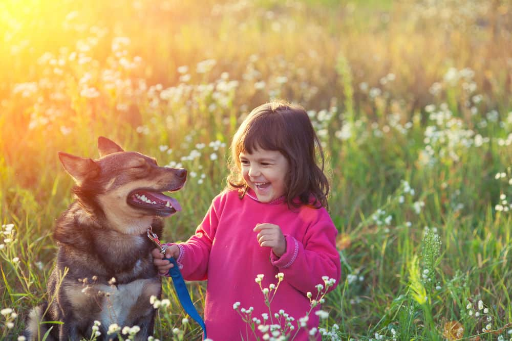 Criança e cão no campo