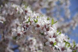 10 lugares para ver as amendoeiras em flor em Portugal