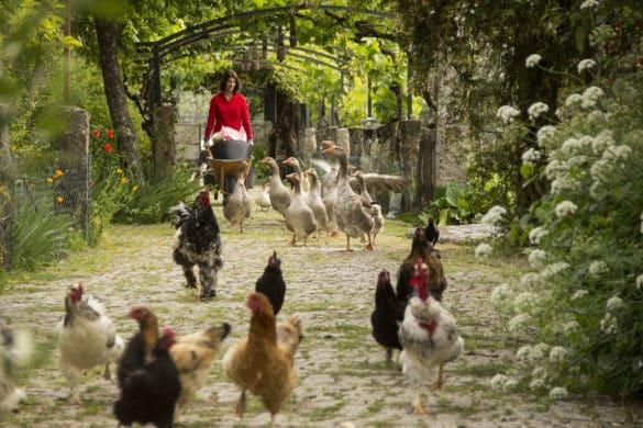 Casas rurais com quintas de animais para animar toda a família