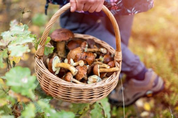 10 casas de campo onde pode apanhar cogumelos