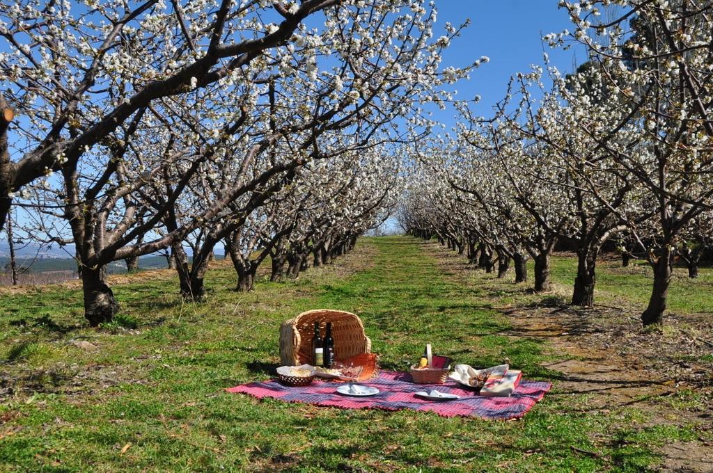 Cerejeiras Fundão
