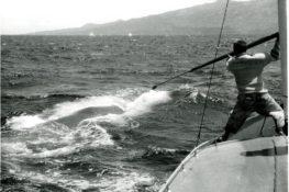 No Pico, antes matavam baleias, hoje salvam-nas