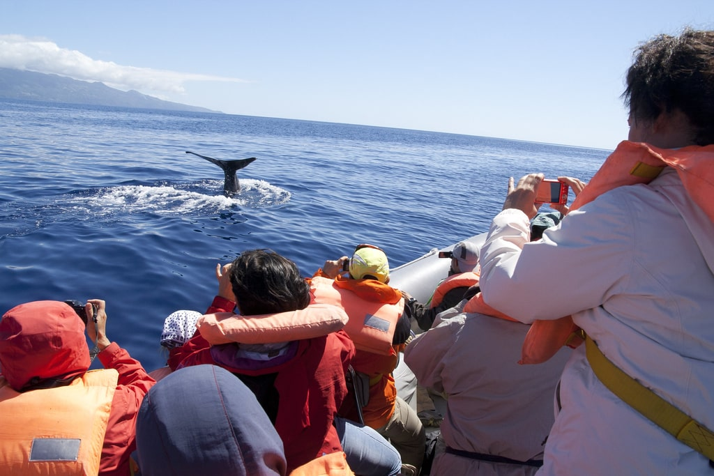 Whale watching Açores